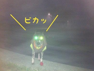 霧でピカッ.JPG