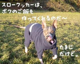 スロークッカーで犬のご飯.JPG
