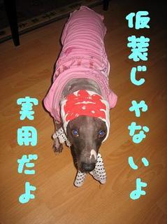 ほっかむり犬.JPG