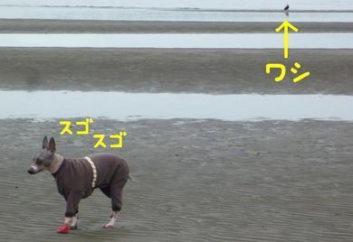 またビッショリ2.JPG