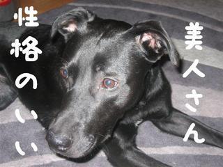 ボール犬ドルチェ1.JPG