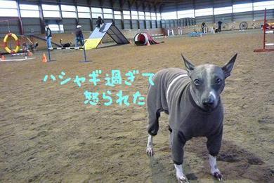 多忙な犬.JPG