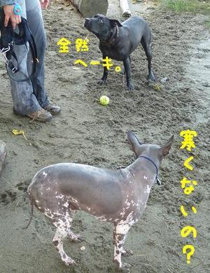 犬を飼うという事1.JPG