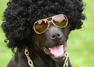 ブラザー犬.JPG