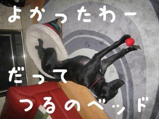 ボール犬ドルチェ3.JPG