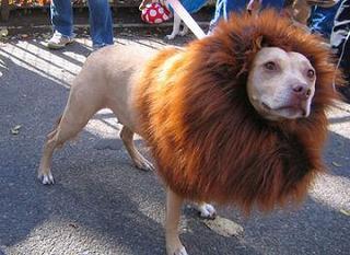ライオン犬.JPG