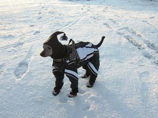 Snow Suits.jpg